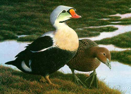 Oil Paintings Production:Federal Duck Stamp  hspace=