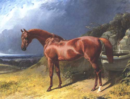 Oil Paintings Production:John Frederick Herring Sr. - Chestnut A Racehorse hspace=